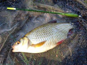 A Rudd lies in the net after being caught