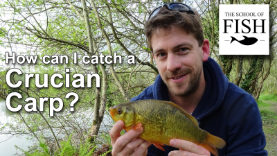How can I catch Crucian Carp