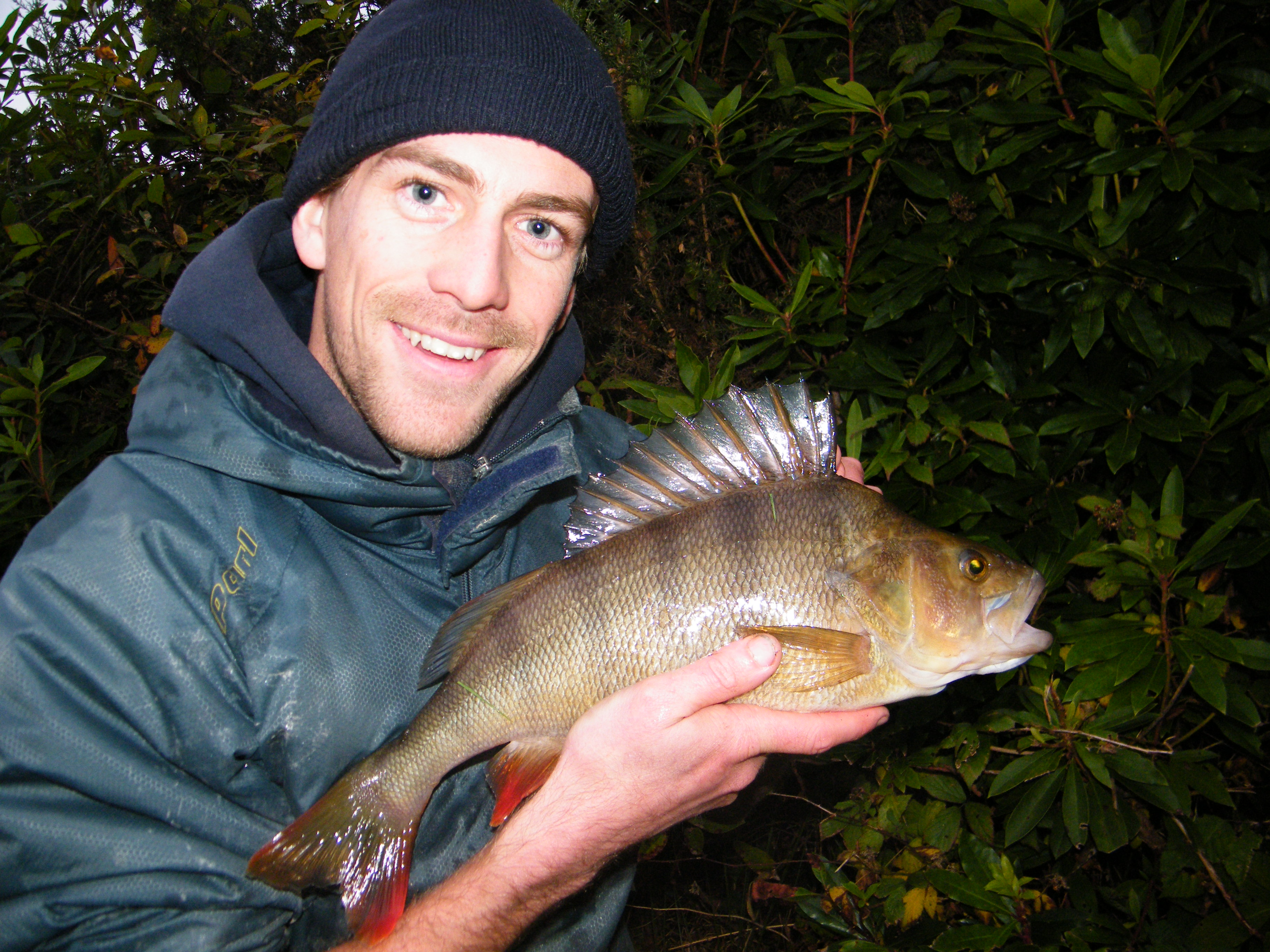Alex with a large Perch caught from a small water in Cornwall