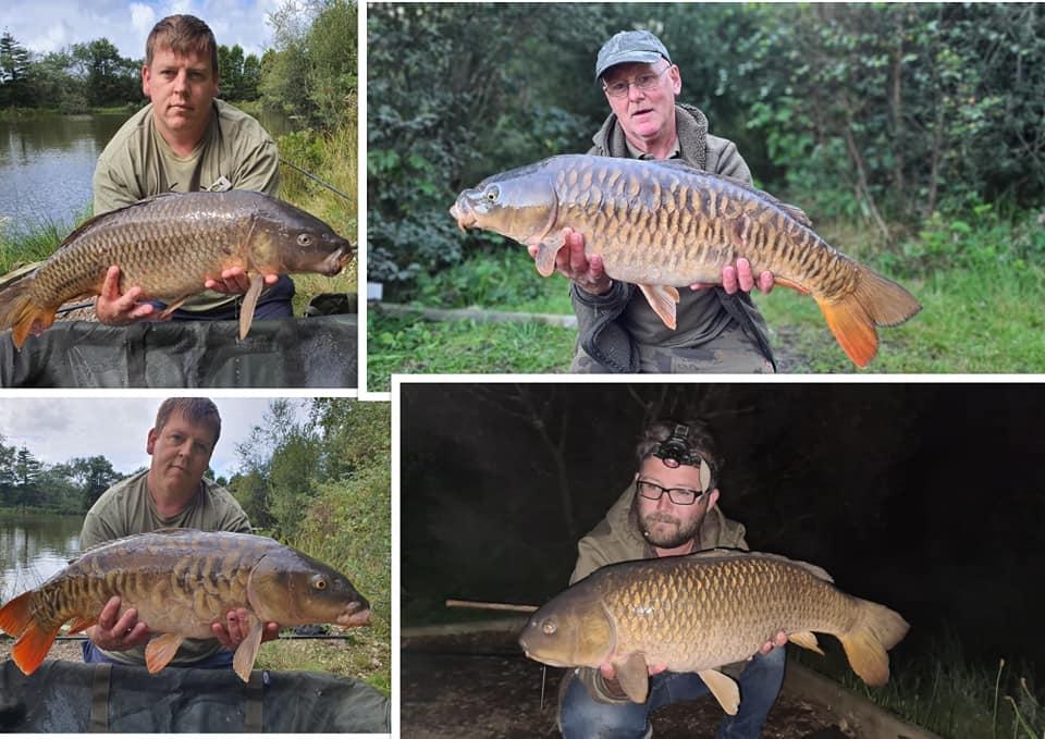 Waterside Fishery_Carp Collage